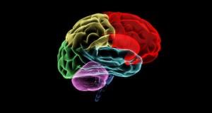 sağ beyin eğitimi nasıl yapılır